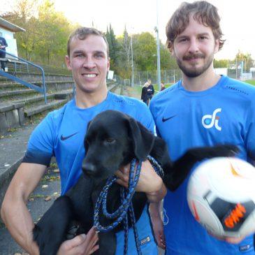 Verdienter VfB Heimerfolg